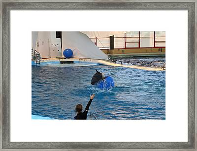 Dolphin Show - National Aquarium In Baltimore Md - 121241 Framed Print by DC Photographer