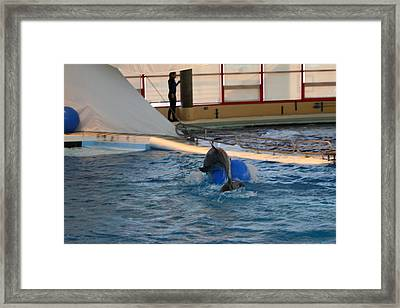 Dolphin Show - National Aquarium In Baltimore Md - 121243 Framed Print by DC Photographer