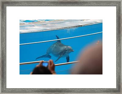 Dolphin Show - National Aquarium In Baltimore Md - 121247 Framed Print by DC Photographer