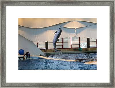 Dolphin Show - National Aquarium In Baltimore Md - 121254 Framed Print by DC Photographer