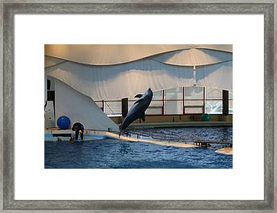 Dolphin Show - National Aquarium In Baltimore Md - 121256 Framed Print
