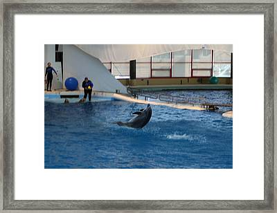 Dolphin Show - National Aquarium In Baltimore Md - 121258 Framed Print by DC Photographer