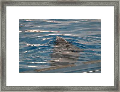 Dolphin Show - National Aquarium In Baltimore Md - 12126 Framed Print by DC Photographer