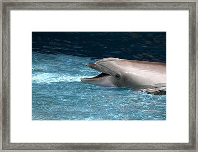 Dolphin Show - National Aquarium In Baltimore Md - 121260 Framed Print by DC Photographer