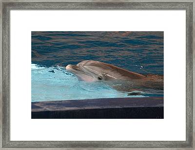Dolphin Show - National Aquarium In Baltimore Md - 121261 Framed Print by DC Photographer