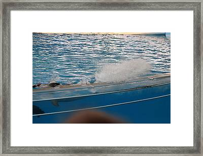 Dolphin Show - National Aquarium In Baltimore Md - 121262 Framed Print by DC Photographer