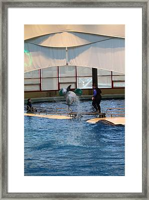 Dolphin Show - National Aquarium In Baltimore Md - 121267 Framed Print by DC Photographer