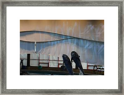 Dolphin Show - National Aquarium In Baltimore Md - 121276 Framed Print by DC Photographer