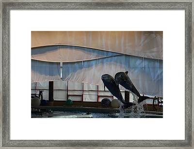 Dolphin Show - National Aquarium In Baltimore Md - 121277 Framed Print by DC Photographer