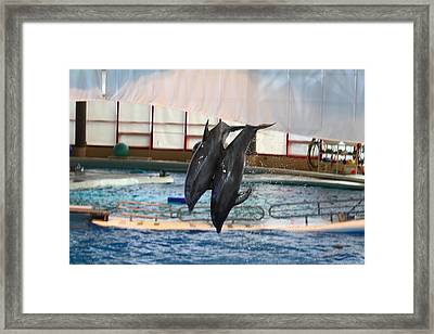 Dolphin Show - National Aquarium In Baltimore Md - 121279 Framed Print