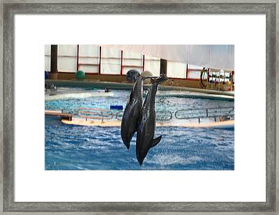 Dolphin Show - National Aquarium In Baltimore Md - 121280 Framed Print by DC Photographer