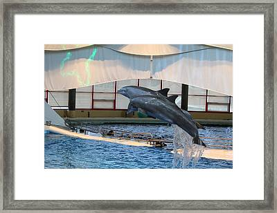 Dolphin Show - National Aquarium In Baltimore Md - 121282 Framed Print