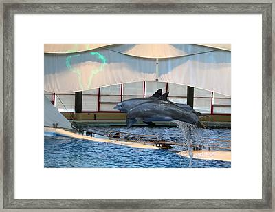 Dolphin Show - National Aquarium In Baltimore Md - 121283 Framed Print