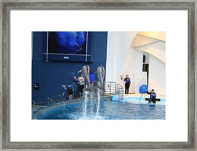 Dolphin Show - National Aquarium In Baltimore Md - 121287 Framed Print