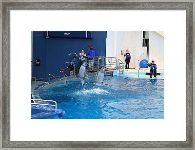 Dolphin Show - National Aquarium In Baltimore Md - 121291 Framed Print by DC Photographer