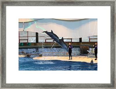 Dolphin Show - National Aquarium In Baltimore Md - 121294 Framed Print