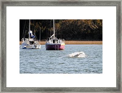 Dolphin Splash Framed Print