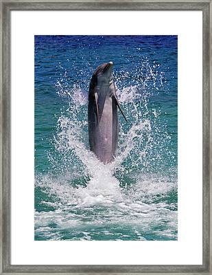 Dolphin Standing Above Water, Roatan Framed Print by Keren Su
