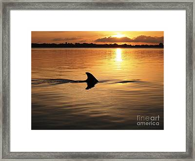 Dolphin Sunrise Framed Print by Fred Benavidez