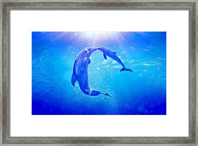 Dolphin Tale 2 Framed Print by Movie Poster Prints