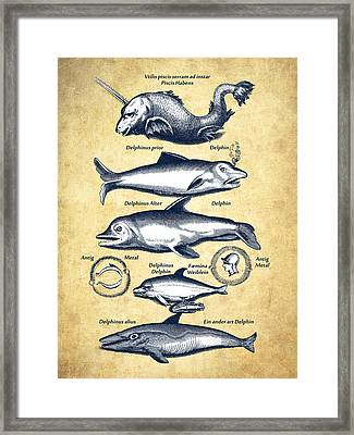 Dolphins - Historiae Naturalis - 1657 - Vintage Framed Print by Aged Pixel