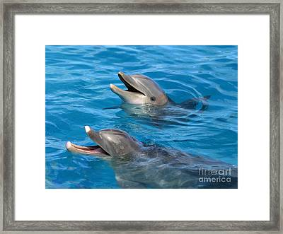 Framed Print featuring the photograph Dolphins by Kristine Merc