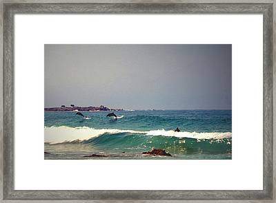 Dolphins Swimming With The Surfers At Asilomar State Beach  Framed Print by Joyce Dickens