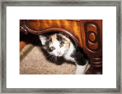 Domestic Calico Kitten Peeking Framed Print