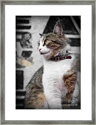 Domestic Cat Framed Print by Jelena Jovanovic