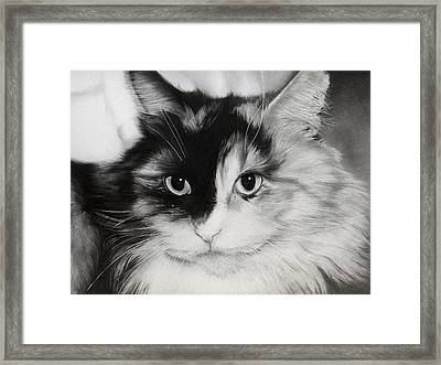 Domestic Cat Framed Print by Natasha Denger