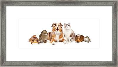 Domestic Pet Composite Framed Print by Susan Schmitz