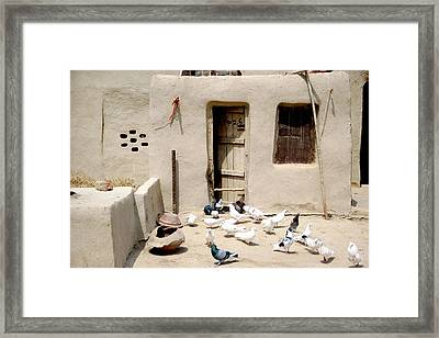 Domestic Pigeons In Mud House Framed Print by Iftikhar Ahmed