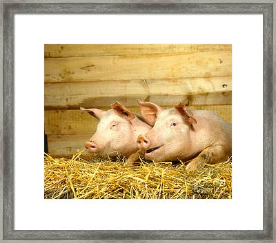 Domestic Pigs Framed Print by Hans Reinhard