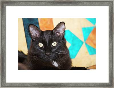 Domestic Shorthair Black Cat Sitting Framed Print