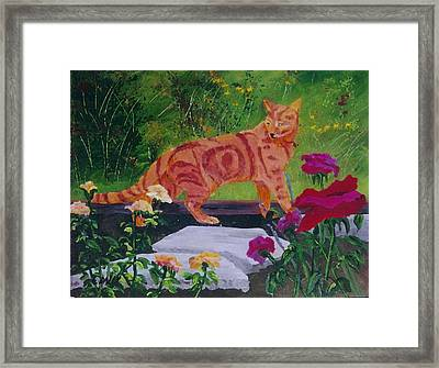Domestic Tiger Framed Print