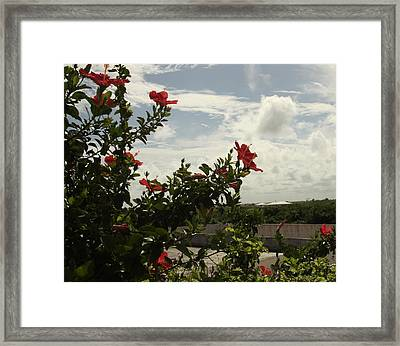 Dominican Red Flower Framed Print
