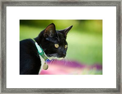 Domino Puts On Her Imaginary Viennese Hat Framed Print by Wolf Kettler