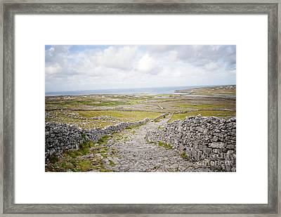 Don Angus Walk Framed Print by Danielle Summa