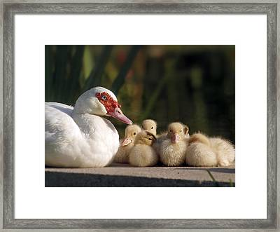 Framed Print featuring the photograph Donalds Family by Meir Ezrachi