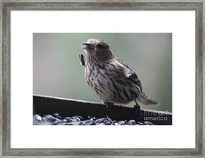 Done Eating That Seed Framed Print by Kym Backland