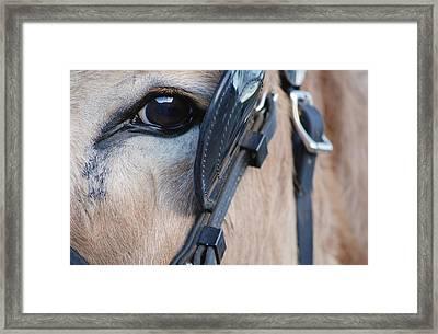 Donkey Eye Framed Print