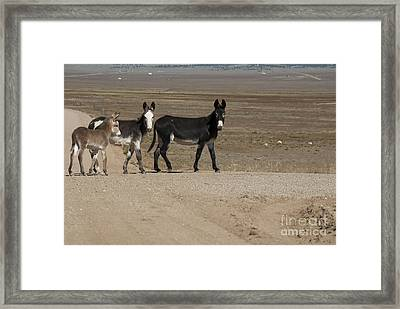 Donkey Family Framed Print