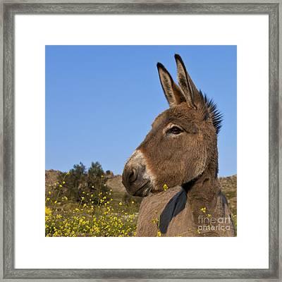 Donkey In Greece Framed Print