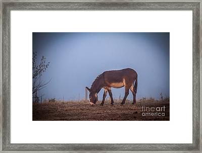 Donkey In The Fog Framed Print