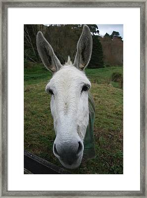 Framed Print featuring the photograph Donkey by Jocelyn Friis