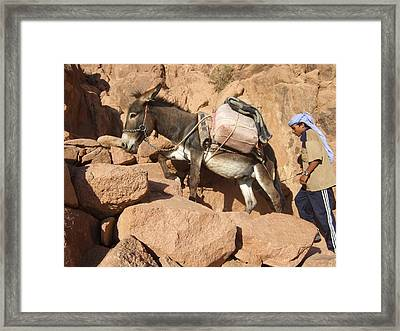 Donkey Of Mt. Sinai Framed Print