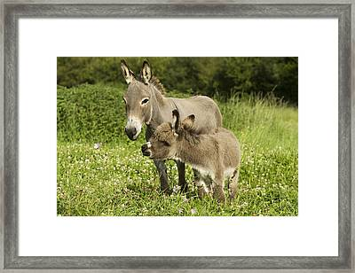 Donkey With Foal Framed Print