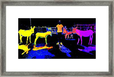 I Am Living In This Dark Donkey Place Opposite The Real World Framed Print by Hilde Widerberg