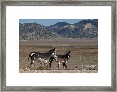 Donkeys In The Colorado Rockies Framed Print