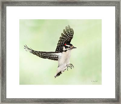 Donny Downy Framed Print by Gerry Sibell